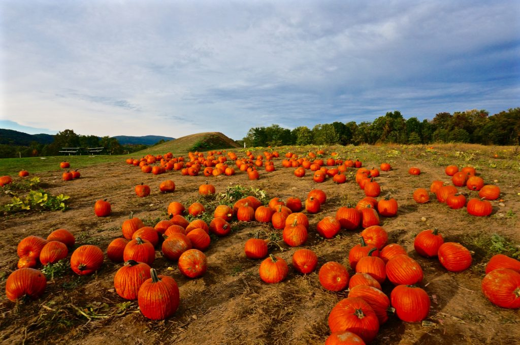 luxury travel blog hudson valley pumpkin patch near new york city fall season