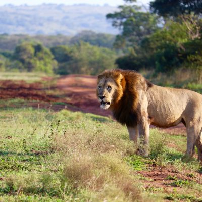 South Africa – How to Maximize Your Vacation Time with the Perfect Itinerary